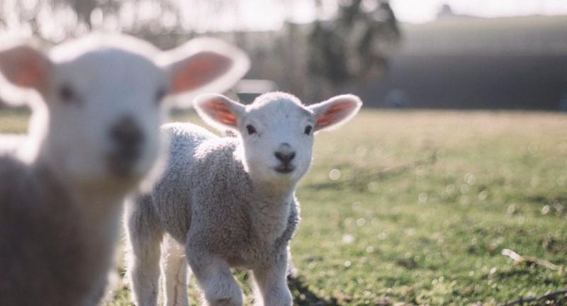 Happy Easter from Wales For Europe! • Pasg Hapus oddi wrth Cymru Dros Ewrop!